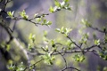 Картинка зелень, листья, свет, деревья, природа, ветви, весна