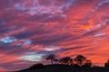 Картинка небо, облака, деревья, силуэт, холм, зарево