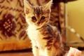 Картинка котёнок, малыш, мордочка, взгляд