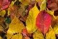 Картинка осень, листья, красно-жёлтые