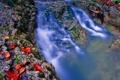 Картинка листья, река, камни, поток