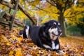 Картинка друг, осень, взгляд, собака