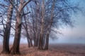 Картинка пейзаж, поле, деревья, туман