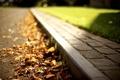 Картинка дорога, осень, трава, листья, солнце, макро, свет