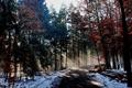 Картинка зима, дорога, лес, лучи, свет, природа