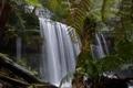 Картинка поток, лес, заросли, деревья, водопад