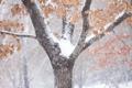 Картинка зима, листья, снег, дерево