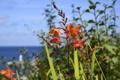 Картинка море, небо, макро, цветы, растения