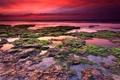 Картинка море, небо, водоросли, камни, рассвет, аргентина, мирамар