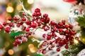 Картинка декорации, Рождество, остролист, New Year, Christmas, елка, падуб