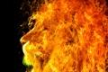 Картинка огонь, хищник, профиль, лев, животное