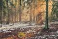 Картинка природа, лес, пейзаж