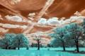 Картинка поле, деревья, пейзаж, цвет