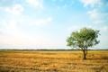 Картинка поле, трава, дерево, листва, сухая