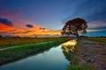 Картинка поле, небо, облака, закат, дерево, канал