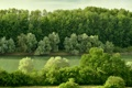 Картинка лес, деревья, река