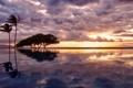 Картинка облака, бассейн, небо, океан, пальма, вода, дерево