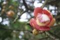 Картинка цветок, блики, розовый, ветка, размытость, бутон