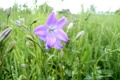 Картинка цветок, трава, зелень обои