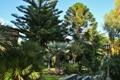 Картинка Sicilia Viagrande, деревья, фото, природа, Италия, парк
