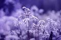 Картинка фиолетовый, макро, кустарник