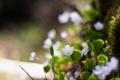Картинка цветы, природа, маккро