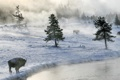 Картинка зима, снег, туман, река, бизоны