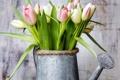 Картинка лейка, тюльпаны, tulips, spring, flowers