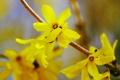 Картинка цветы, природа, ветка, лепестки