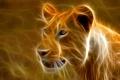 Картинка львица, лев, африка, кошка, штрих