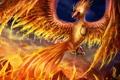 Картинка фантастика, огонь, птица, крылья, клюв, арт, phoenix