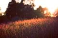 Картинка закат, лето, поле, вечер, обои, природа, фон
