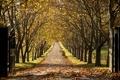 Картинка пейзаж, осень, деревья