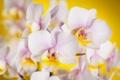 Картинка цветы, фон, орхидеи