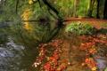 Картинка лес, вода, отражение, Осень
