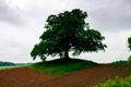 Картинка природа, пейзаж, поле, дерево