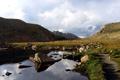 Картинка трава, вода, природа, камни, пейзажи, фотографии