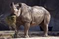 Картинка сено, носорог, зоопарк