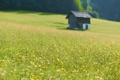 Картинка дома, фото, природа, поле, фокус, поля, цветы