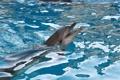 Картинка море, животные, дельфин