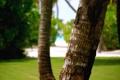 Картинка зелень, пляж, трава, листья, пальма, дерево, луг