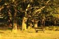 Картинка деревья, скамейка, солнечный свет, вечер, парк, листва