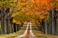 Картинка дорога, осень, деревья, природа, цветные