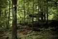 Картинка лес, деревья, беседка