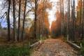 Картинка листья, осень, роща, дорога
