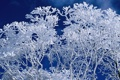 Картинка небо, снег, деревья