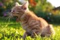 Картинка трава, котенок, газон, рыжий, солнечно, мяучит
