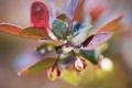 Картинка листья, капли, макро, свет, фото, растение, бутоны