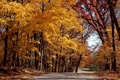 Картинка green, trees, autumn, leaves
