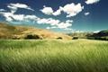 Картинка поле, лето, небо, трава